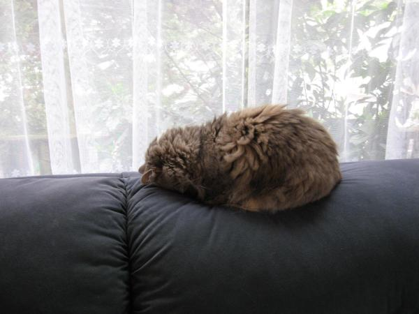 sofa tribble